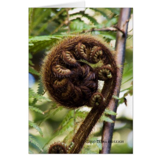 Kauri Forest Fern Card