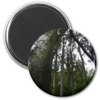 Kauri Forest Magnet