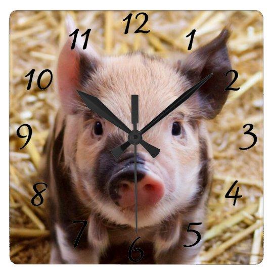 Kawaii cute adorable farm baby piglet pig animal