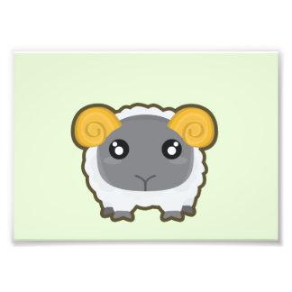 Kawaii Sheep Photograph