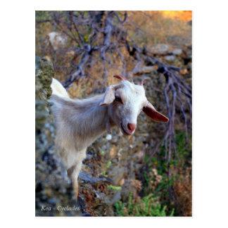 Kea - Cyclades Postcard