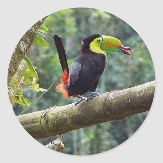 Keel Billed Toucan Classic Round Sticker