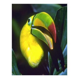 Keel-billed toucan flyers