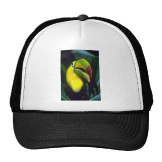 Keel-billed toucan hats