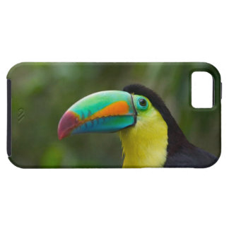 Keel-billed toucan on tree branch, Panama iPhone 5 Case