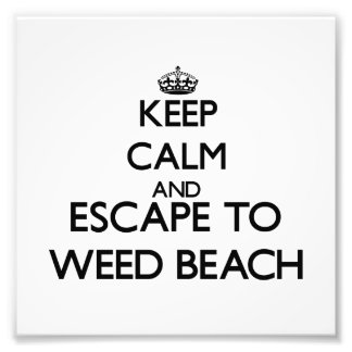 Keep calm and escape to Weed Beach Connecticut Photo