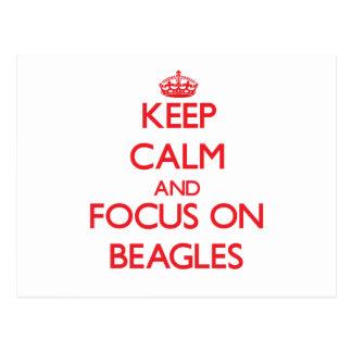 Keep Calm and focus on Beagles Postcard
