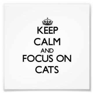Keep calm and focus on Cats Photo
