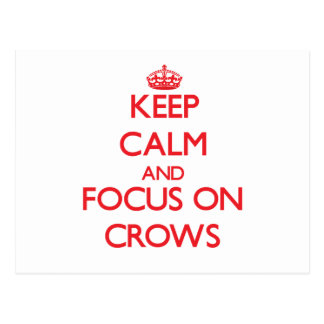Keep Calm and focus on Crows Postcard