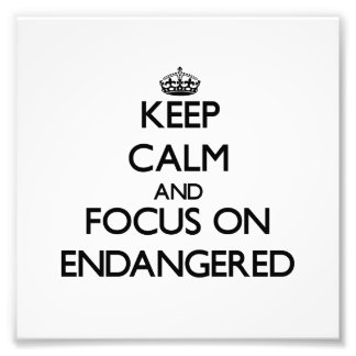 Keep Calm and focus on ENDANGERED Photograph