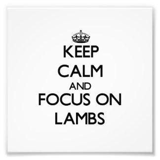 Keep Calm and focus on Lambs Photo