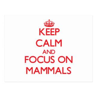 Keep Calm and focus on Mammals Postcard