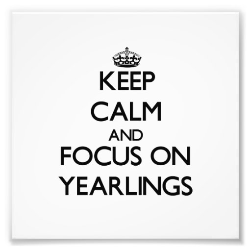 Keep Calm and focus on Yearlings Photo