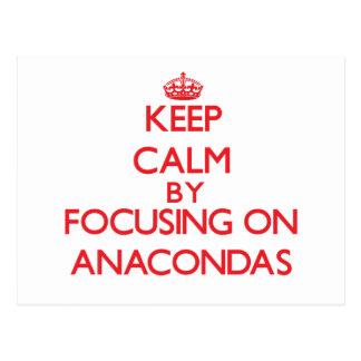 Keep calm by focusing on Anacondas Post Card