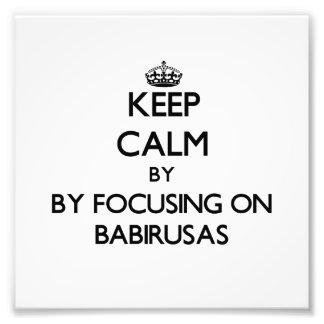 Keep calm by focusing on Babirusas Photo