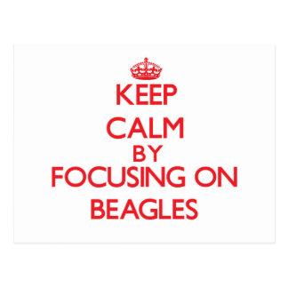 Keep Calm by focusing on Beagles Postcard