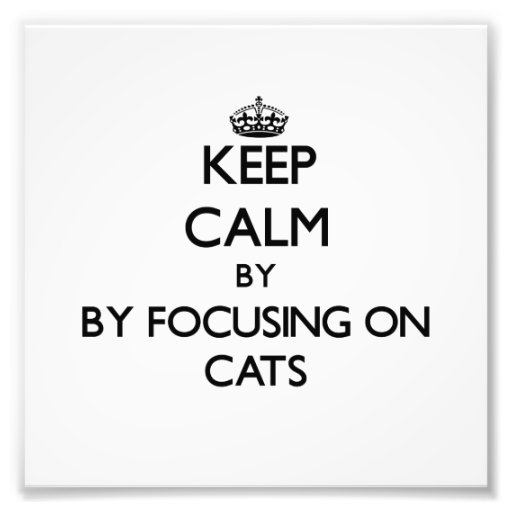 Keep calm by focusing on Cats Photograph