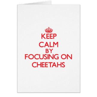 Keep Calm by focusing on Cheetahs Card