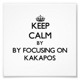 Keep calm by focusing on Kakapos Photo
