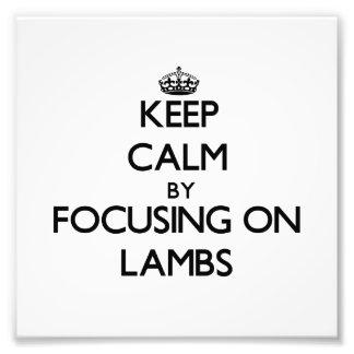 Keep Calm by focusing on Lambs Photo Art
