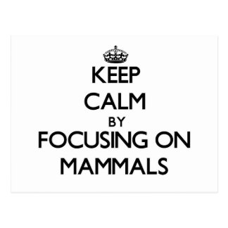 Keep Calm by focusing on Mammals Post Card