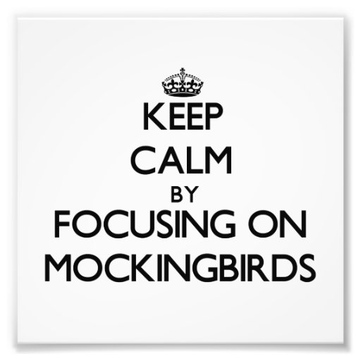 Keep Calm by focusing on Mockingbirds Art Photo