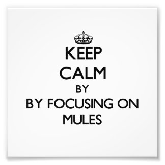 Keep calm by focusing on Mules Photograph