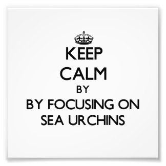 Keep calm by focusing on Sea Urchins Photo Print