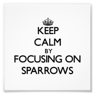 Keep Calm by focusing on Sparrows Photo Print