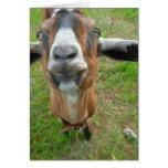 keepin my gap! Mariah the Goat card