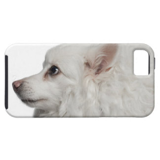 Keeshond (10 years old) close-up iPhone 5 case