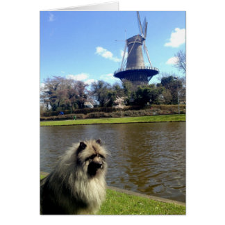 Keeshond and Dutch Windmill Card