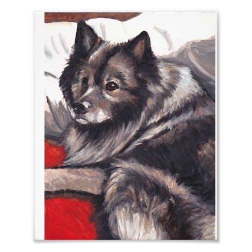 Keeshond Dog Art Print Art Photo