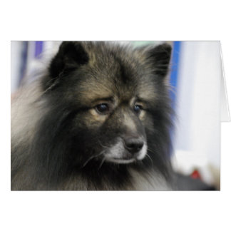 Keeshond Dog Greeting Card