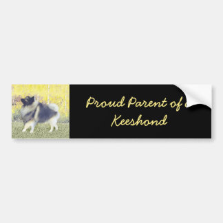 Keeshond in Aspen Bumper Sticker