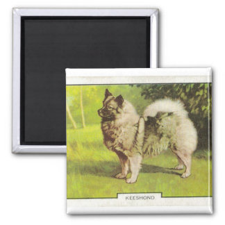 Keeshond Magnet