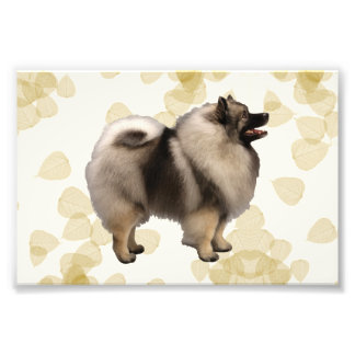 Keeshond on Tan Leaves Photo Art