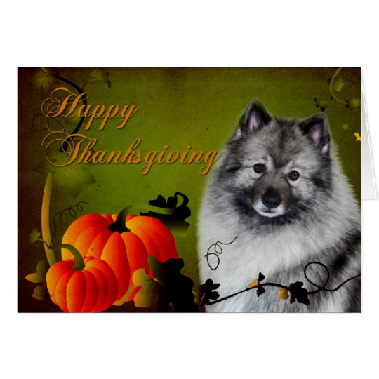 Keeshond Thanksgiving Card