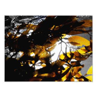 Kelp Shadows Photographic Print