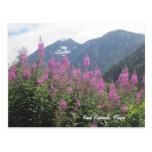 Kenai Peninsula, Alaska Post Card