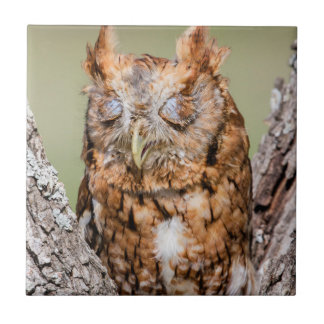 Kendall County, Texas. Eastern Screech-Owl 1 Small Square Tile