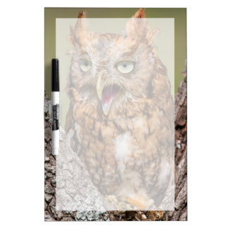 Kendall County, Texas. Eastern Screech-Owl 2 Dry Erase Board
