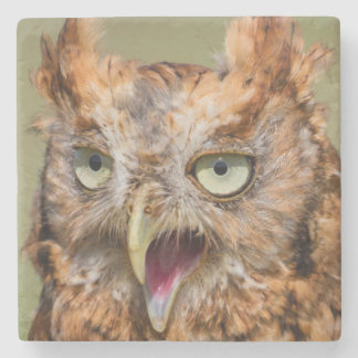 Kendall County, Texas. Eastern Screech-Owl 2 Stone Coaster