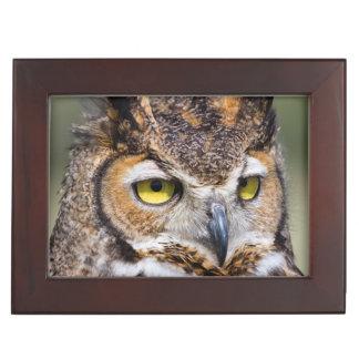 Kendall County, Texas. Great Horned Owl Keepsake Box