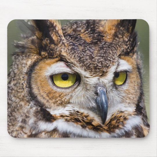 Kendall County, Texas. Great Horned Owl Mouse Mat