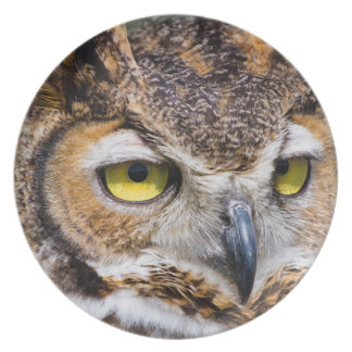 Kendall County, Texas. Great Horned Owl Plate