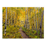 Kenosha to Breckenridge Trail Oil Painting Post Card