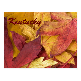 Kentucky Autumn Leaves Postcard