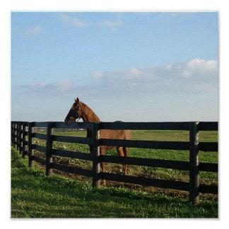 Kentucky Bluegrass Horse Scene Print