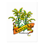 Kentucky Goldenrod Post Card